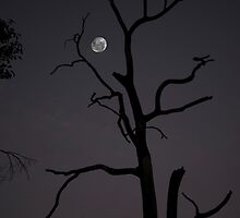 Full Moon Silhouette by Neil Bushby
