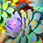 Succulent Color - Botanical Art By Sharon Cummings by Sharon Cummings