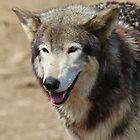 Wolf II by Tony Wilder