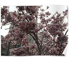 Spring Colors, Union Square, New York City Poster