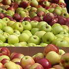 Colorful Apples, Union Square Farmers Market, Union Square, New York City by lenspiro