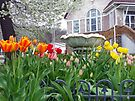 Spring Tulips by Susan S. Kline