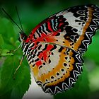 Butterfly  by Tracey Hampton
