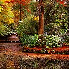 Autumn in Sherbrooke Forest Melbourne Australia by Ronald Rockman