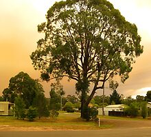 Fires in East Gippsland - February 2014 by OzNatureshots