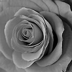 Black and White Rose At Night by Scott Johnson