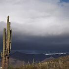 Rainy Arizona Desert by down23