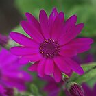 Purple Flower by Desaster