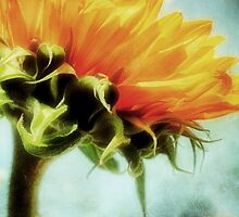 Sunflower by AllyNCoxon