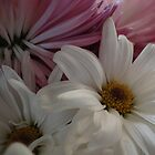 Pretty Painted Daisies by vigor