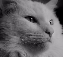 Delain Portrait in Black and White, #3 by Scott Mitchell