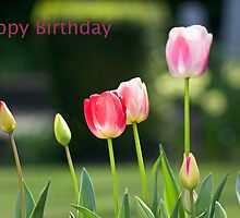 Happy Birthday Card with tulips by ejrphotography