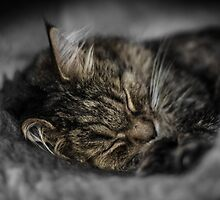 Cat nap by Mark Williams