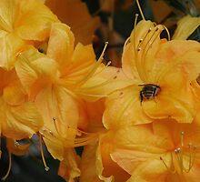 Sweet honey ♡ by Kerry McFall