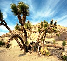 Joshua Trees by wolftinz