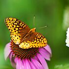 Butterfly Love by Christina Rollo