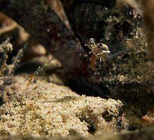 Tongue Shrimp :P by James Deverich