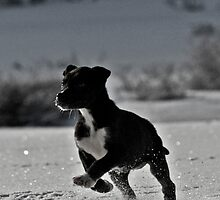 Little greyster puppy by LbgImages