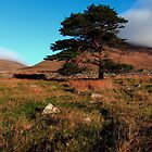 Mournes Glory by Wrayzo