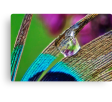 Peacock and Lilac Canvas Print