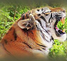 Tiger Tantrums by naturelover