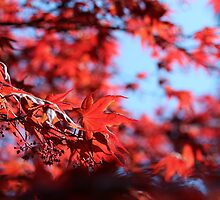 Summer Acer 3 by KayEeGee
