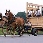Amish Wagon Belgian Horses by Oldetimemercan