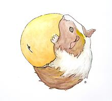 Guinea Pig & Orange by Tim Gorichanaz