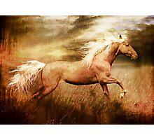 Fleet Palamino Horse Photographic Print