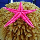 pink starfish by habish