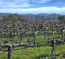 Vines in winter. Napa California. by Diego  Re