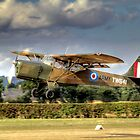 Beagle A-61 Terrier 2  by larry flewers