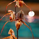 USA. Philadelphia Flower Show 2014. Orchids. by vadim19