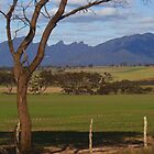 Stirling Ranges by Melva Vivian