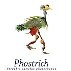 Phostrich by Kristi Nobers