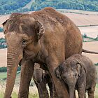 Lean on Me Little Elephant by Chris Thaxter