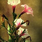 Beauty on a Stalk by RC deWinter