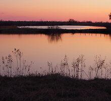 Red Sunset by WildestArt