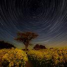 Yellow by jakeof