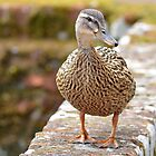 Friendly Duck by relayer51