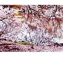 Blossoming cherry tree branches touching water art photo print Photographic Print