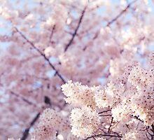 Artistic closeup of cherry blossom art photo print by ArtNudePhotos