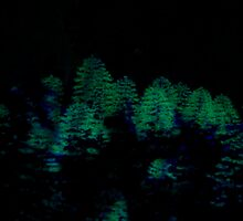 Night Vision In the Southern Forest by Elliot-Four