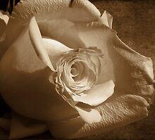 Faded Beauty by Lynn Bolt