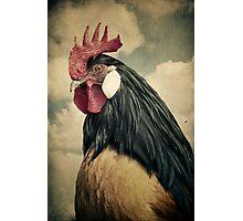 Cock Photographic Print