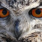 Eagle Owl Stare by Peter Barrett