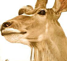 Ma belle Gazelle by Tanya14