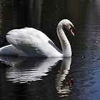 The Swan of my dreams... by Poete100