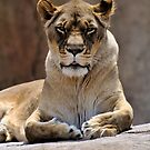 It's better to live one day as a lion, than a hundred as a sheep. by Matthew Reed