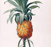 P.J.Redoute vintage botanical illustration pineapple. by naturematters